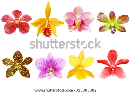 Various orchids flowers isolated on white background - stock photo