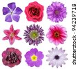 Various Pink, Purple, Red Flowers Isolated on White Background. Selection of Nine Periwinkle, Rose, CornFlower, Lily, Daisy, Chrysanthemum, Dahlia, Carnation, Primrose Flowers - stock photo