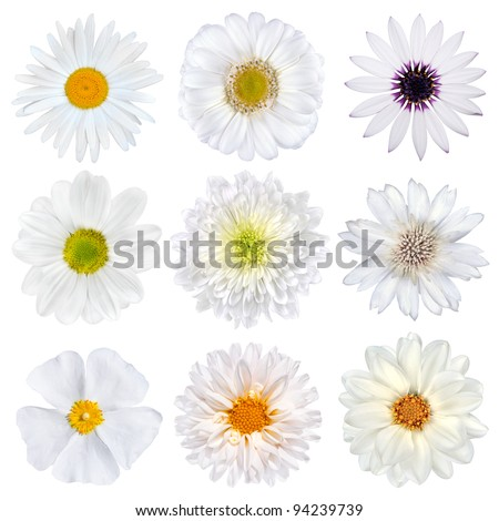 Various Selection of White Flowers Isolated on White Background. Set of Nine Daisy, Gerber, Marigold, Osteospermum, Chrysanthemum, Strawflower, Cornflower, Dahlia Flowers - stock photo