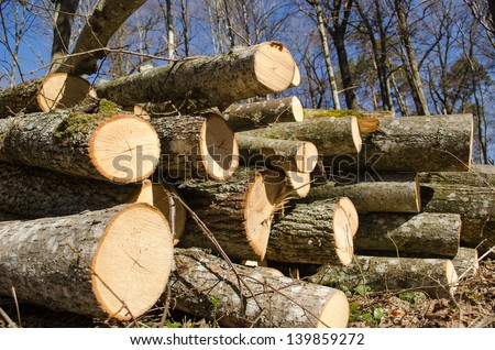 various size cut tree trunks logs body firewood stack in forest on background of blue sky. deforestation area in spring. - stock photo