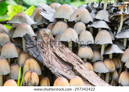 Various Small Mushrooms of Different Colours  - stock photo