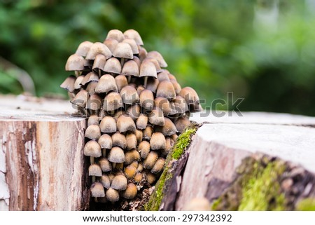 Various Small Mushrooms of Different Colours on Freshly Cut Tree Stump - stock photo