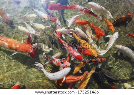 Various type of fish in the pool - stock photo