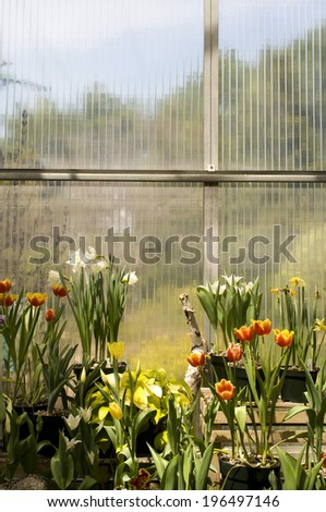 Various types of flowers growing in pots on crates. - stock photo