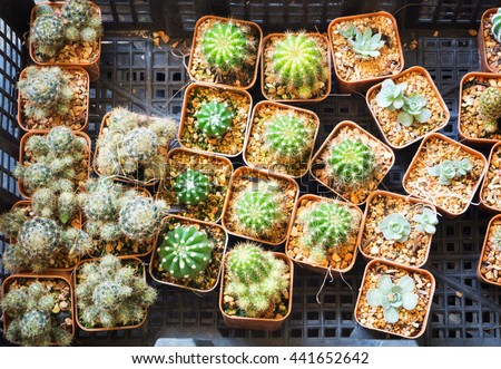 Various types of little cactus in basket selling in market - stock photo
