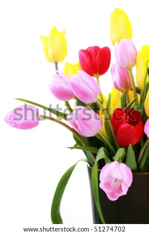 vase full of colorful tulips - flowers and plants - stock photo