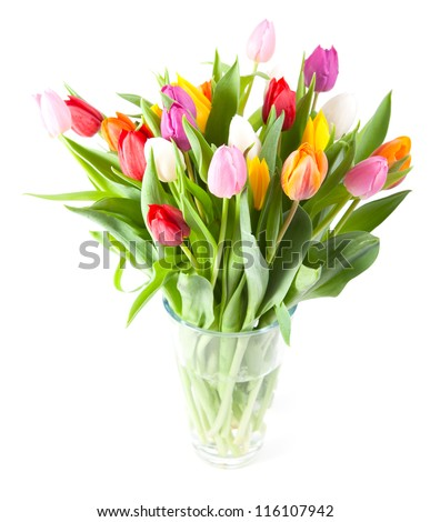Vase of Tulips isolated on white background - stock photo