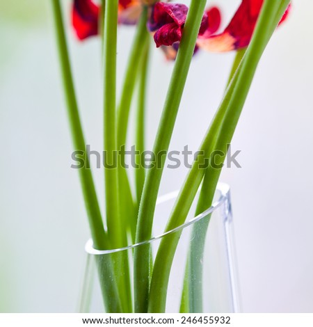 Vase with sere flowers - stock photo