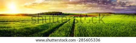 Vast rural landscape sunset panorama, with a field or meadow and tracks leading to the horizon and the colorful clouds - stock photo