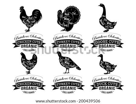 vector diagram cut carcasses chicken, turkey, goose, duck - stock photo