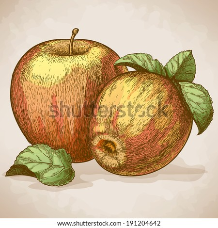 vector engraving illustration of  two red apples and leaves - stock photo