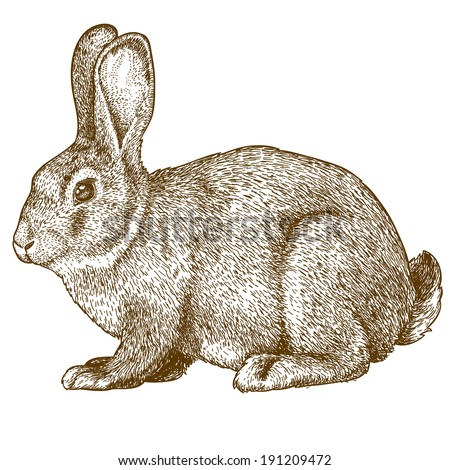 vector illustration of engraving rabbit on white background - stock photo