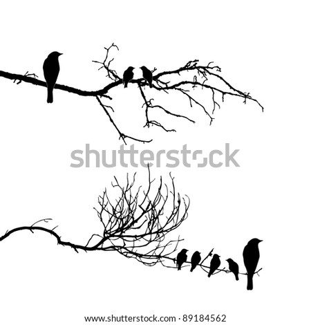 vector silhouette of the birds on branch - stock photo