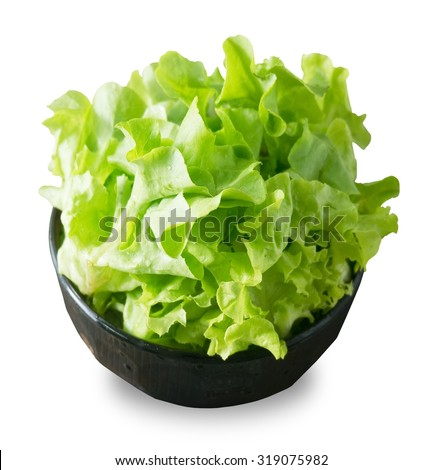 Vegetable, A Bowl of Delicious Fresh Green Lettuce Leaves Isolated on White Background. - stock photo