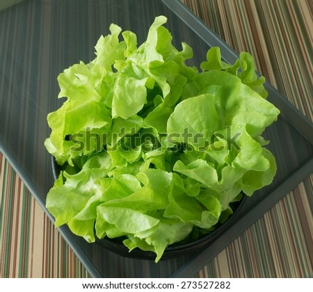 Vegetable and Food, Fresh Raw Lettuce Leaves in A Bowl on Grey Tray. - stock photo