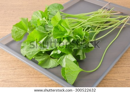 Vegetable and Herb, Asiatic Pennywort, Centella Asiatica, Thankuni or Gotu Kola Plant Herb Alternative Medicine for Arthritis and Juice.