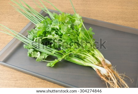 Vegetable and Herb, Bunch of Fresh Green Parsley, Chinese Parsley or Coriander and Scallion for Seasoning in Cooking on A Tray. - stock photo
