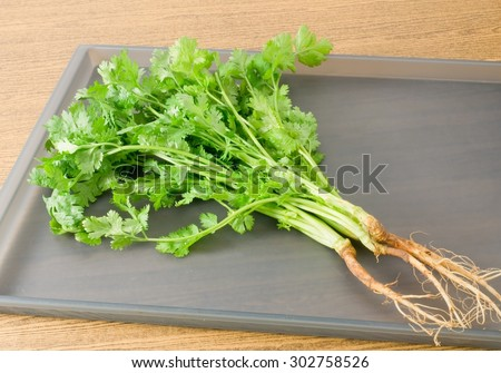 Vegetable and Herb, Bunch of Green Parsley, Chinese Parsley or Coriander for Seasoning in Cooking on A Grey Tray. - stock photo