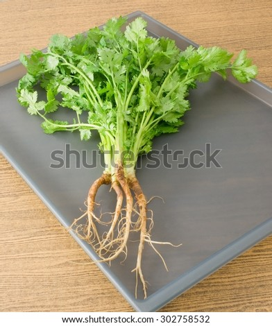 Vegetable and Herb, Bunch of Parsley, Chinese Parsley or Coriander for Seasoning in Cooking on A Tray. - stock photo