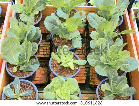 Vegetable Community garden with assortment vegetables