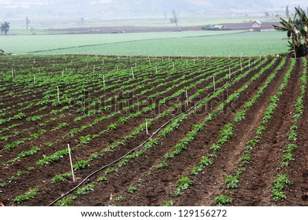 vegetable cultivation - stock photo