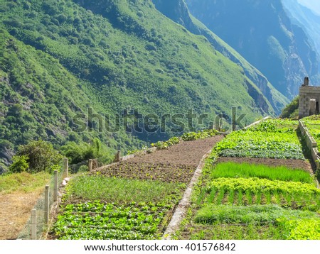 Vegetable farm agriculture at Tiger Leaping Gorge. Located 60 kilometers north of Lijiang City, Yunnan Province, China. - stock photo