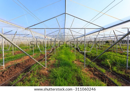 vegetable farm planting in glasshouse abandoned