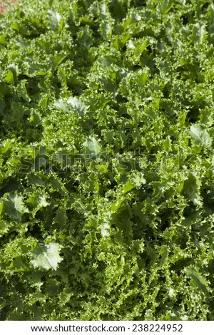 vegetable garden - stock photo