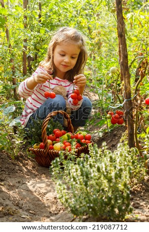 Vegetable garden, child - lovely girl with the basket of ecological harvests - stock photo