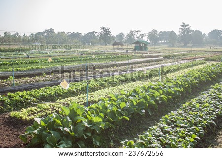 vegetable garden in thailand - stock photo