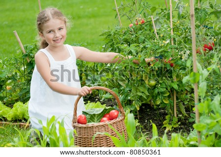 Vegetable garden - little girl picking ripe tomatoes - stock photo