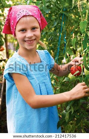 Vegetable garden - lovely gardener with harvests of ripe tomatoes  - stock photo