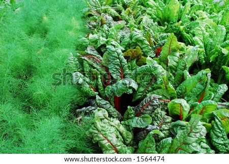 Vegetable garden - Montreal Botanical Gardens - stock photo