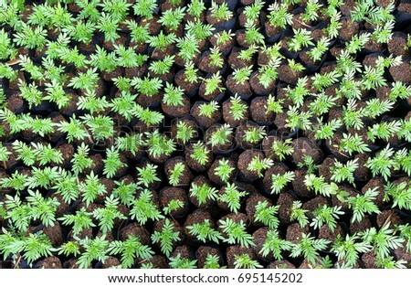Vegetable Garden Top ViewVegetable Seedling ViewMany Small Plant View