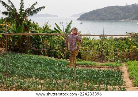 Vegetable garden with a scarecrow at Lantau island, Hong Kong