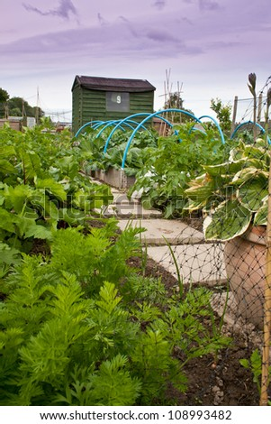 Vegetable garden with shed in the background - stock photo