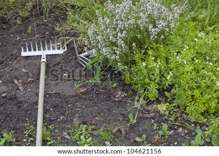 vegetable growing in a cottage garden, with growing savory and other vegetable plants. - stock photo