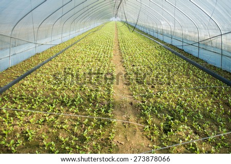 vegetable nursery greenhouse in South Korea - stock photo
