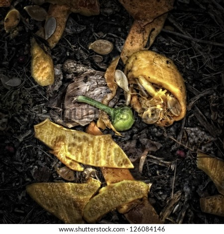 Vegetable waste on a Compost Heap/Artistically alienated to create a grungy somber atmosphere. - stock photo
