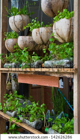 Vegetable window garden, Vegetable planting pot made from the waste material, urban vegetable garden, source of safety food for urban lives - stock photo
