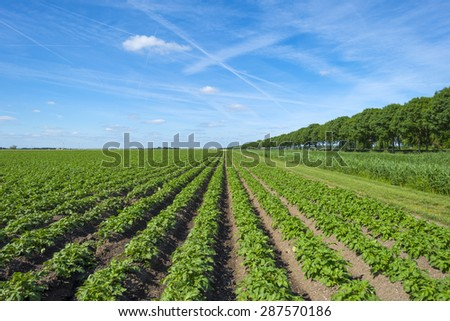 Vegetables growing on a field in spring