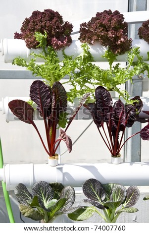 vegetables hydroponics cultivation in greenhouses - stock photo