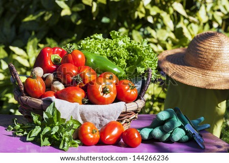 Vegetables in a basket under the sunlight - stock photo