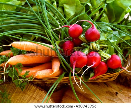 vegetables in basket: radish, carrot and chives - stock photo