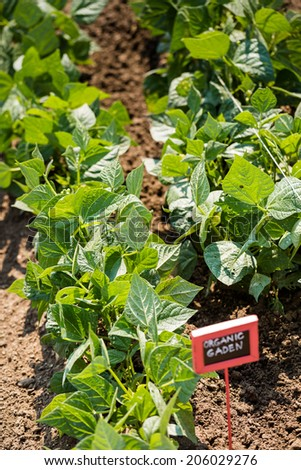 Vegetables in local community garden in middle of the Summer. - stock photo