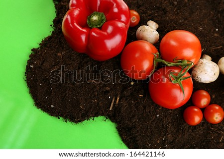 Vegetables on ground on color background - stock photo