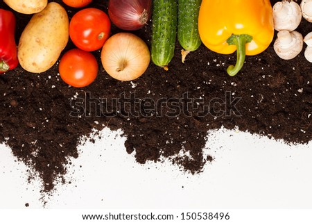 vegetables on the soil - stock photo