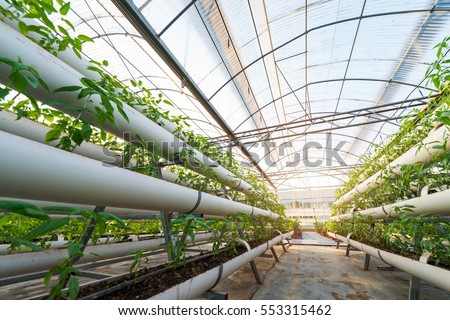 Vegetables Plants Growing In A Greenhouse Witch Made From Metal Profile
