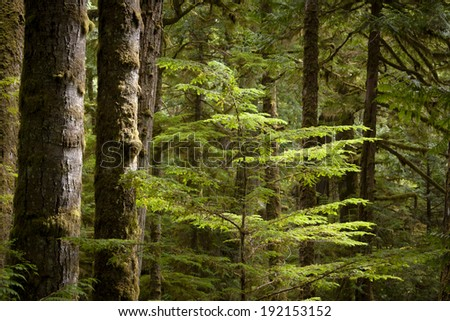 Vegetation in BC's Coastal Rainforest, Canada