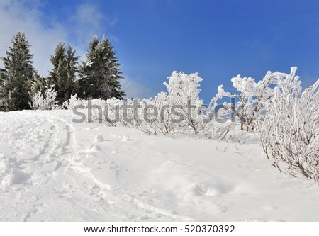 vegetation in mountain covered by snow in winter